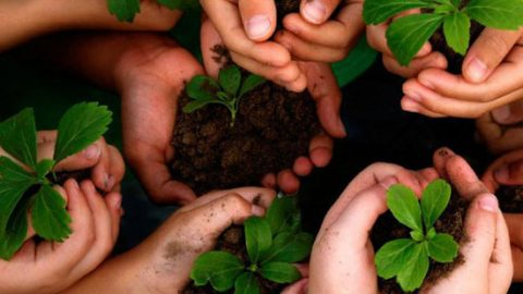 Seven Ways You Can Contribute To Saving The Environment
